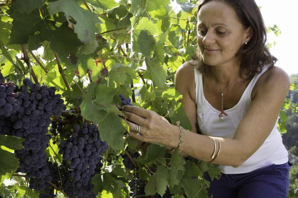 Weinrebe Poggio-Ridente_Cecilia-Zucca